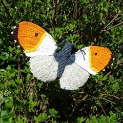 Orange Tip Butterfly amigurumi pattern by MieksCreaties